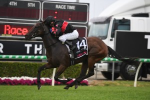 Away Game, above, could be set for the 2020 Manikato Stakes at The Valley. Photo by Steve Hart.