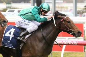 Humidor, above, is among the nominations for the 2019 Memsie Stakes at Caulfield. Photo by Ultimate Racing Photos.
