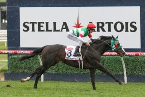 Mer De Glace, above, drew barrier 2 in the 2019 Melbourne Cup at Flemington. Photo by Ultimate Racing Photos.