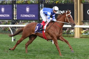 Gytrash, above, has drawn a wide barrier in The Goodwood at Morphettville. Photo by Ultimate Racing Photos.