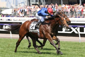 Last year's winner Cross Counter, above, is among the first acceptances for the 2019 Melbourne Cup at Flemington. Photo by Ultimate Racing Photos.