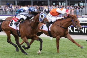 Vow And Declare, above in orange and white colours, is set to fly the flag for the Aussies in the 2019 Melbourne Cup at Flemington. Photo by Ultimate Racing Photos.