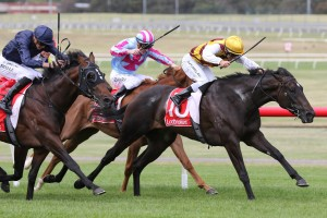 Pretty Brazen, above in gold cap, was the winner of the Let's Elope Stakes at Flemington. Photo by Ultimate Racing Photos.
