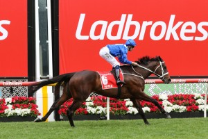 Winx, above, is in fine shape to return to the race track in the 2019 Apollo Stakes at Randwick. Photo by Ultimate Racing Photos.