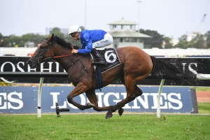 Alizee, above, has drawn a wide gate in the 2019 All-Star Mile at Flemington. Photo by Steve Hart.