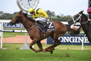 Addeybb, above, is now the favourite for the 2020 Queen Elizabeth Stakes after winning the 2020 Ranvet Stakes at Rosehill. Photo by Steve Hart.