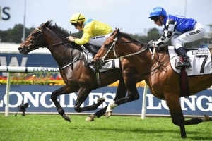 Young Rascal, above in the yellow colours, wins the N E Manion Cup at Rosehill. Photo by Steve Hart.