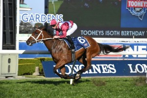 Owner Bob Peters will still have Arcadia Queen, above,  running for him in The Everest following the withdrawal of her stablemate Enticing Star. Photo by Steve Hart.
