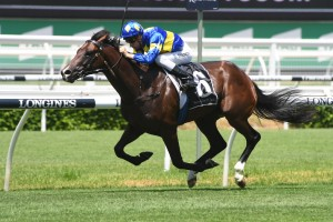 Dawn Passage, above, is the favourite for the 2019 Inglis Millennium at Warwick Farm. Photo by Steve Hart.