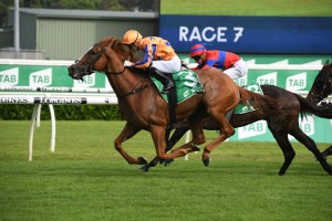 Te Akau Shark, above, is to undergo eye surgery nd is likel to miss th 2020 Spring Carnival. Photo by Steve Hart.