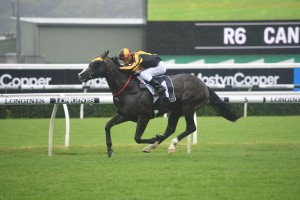 Trapeze Artist, above, scores an all the way win in the Canterbury Stakes at Randwick. Photo by Steve Hart.
