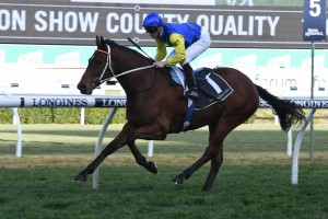 Le Romain, above, has gained a start in the All-Star Mile at Flemington. Photo by Steve Hart.