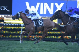 Samadoubt, above, will be hard to run down again in the Chelmsford Stakes at Randwick. Photo by Steve Hart.