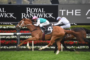 Finche, above in green and white colours, is the equal favourite for the 2019 Caulfield Cup at Caulfield. Photo by Steve Hart.