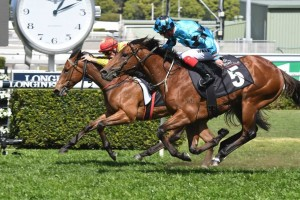 Dubious, above in the aqua colours, has drawn a nice barrier in the 2019 Winterbottom Stakes at Ascot in Perth. Photo by Steve Hart.