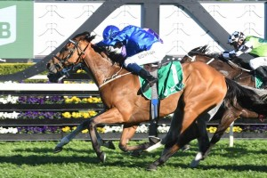 Last year's winner Hartnell, above, is among the nominations for the 2019 Epsom Handicap at Randwick. Photo by Steve Hart.