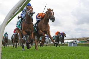Kolding, above in white and blue colours, holds off Te Akau Shark (orange) to win the 2019 Epsom at Randwick. Photo by Steve Hart.