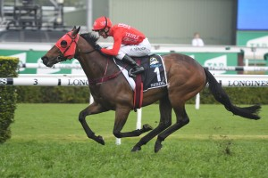 Redzel, above, will kick off his third Everest campaign in the Concorde Stakes at Randwick. Photo by Steve Hart.