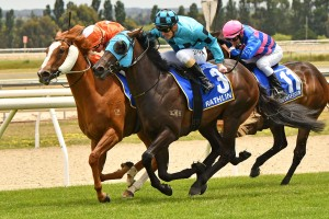 Euphoric Summer, above in orange colours, is numbe one in the order of entry fpr the 2020 Magic Millions 2yo Classic at the Gold Coast. Photo by Ultimate Racing Photos.