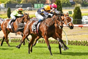 Tofane, above with yellow cap, is looking for a slot in The Everest 2020m at Randwick.