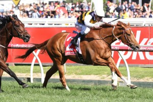 Gailo Chop, above, is the likely leader in the Ladbrokes Cox Plate at The Valley. Photo by Ultimate Racing Photos.