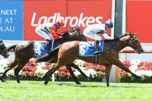 Setsuna, above, wins the first race on 2017 Ladbrokes Cox Plate Day at The Valley. Photo by Ultimate Racing Photos.