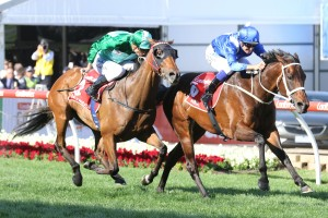 Winx, above in blue colours, holds off Humidor to win the 2017 Ladbrokes Cox Plate at The Valley. Photo by Ultimate Racing Photos.