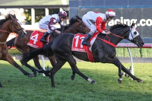 Mystic Journey, above, remains in contention for the 2019 Ladbrokes Cox Plate after first acceptances. Photo by Ultimate Racing Photos.