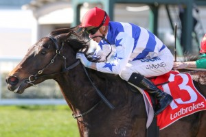Super Titus, above, scored a tough win in the Heatherlie Stakes at Caulfield. Photo by Ultimate Racing Photos.