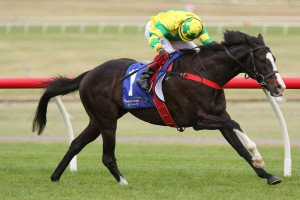 Eclipse Stakes winner Pacodali, above, heads to Perth to chase Group 1 glory. Photo by Ultimate Racing Photos.