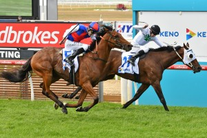 Steel Prince, above in red, blue and white colours, is one of the outsiders of the 2019 Melbourne Cup Field. Photo by Ultimate Racing Photos.