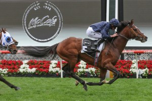 Hunting Horn, above, is one of three runners for trainer Aidan O'Brien in the 2019 Melbourne Cup at Flemington. Photo by Ultimate Racing Photos.