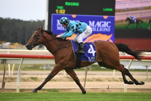 Farnan, above, is the early favourite for the 2020 Magic Millions 2yo Classic at the Gold Coast. Photo by Steve Hart.
